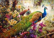 DRAWJOY Peacock Framed DIY Oil Paint DIY Painting By Numbers On Canvas Coloring By Numbers For Home Decor(China)