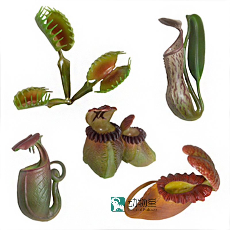 pvc figure Incredible encyclopedia insectivorous plant flytrap grass nepenthes model toys 5pcs/set