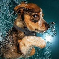 Hot Waterdichte Hond Shock Training Collar Met Afstandsbediening Oplaadbare Elektronische Halsbanden Puppy Small Medium Grote Hond