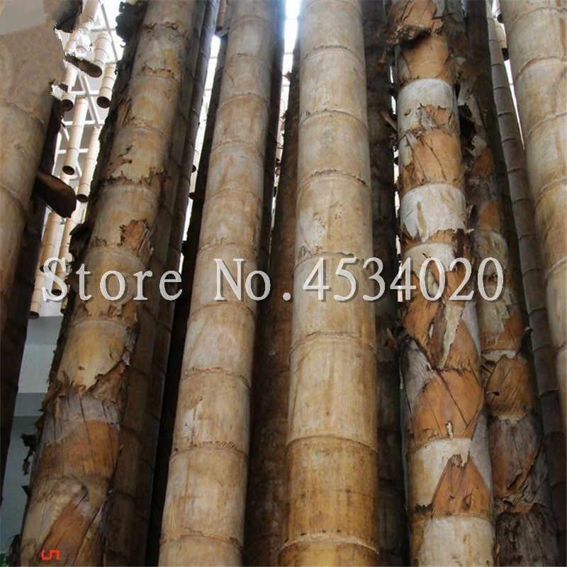 100 шт./пакет огромный Дракон бамбуковые семена бамбука открытый бонсай в горшке Новый Bambusa Лако завод для дома сада посадки