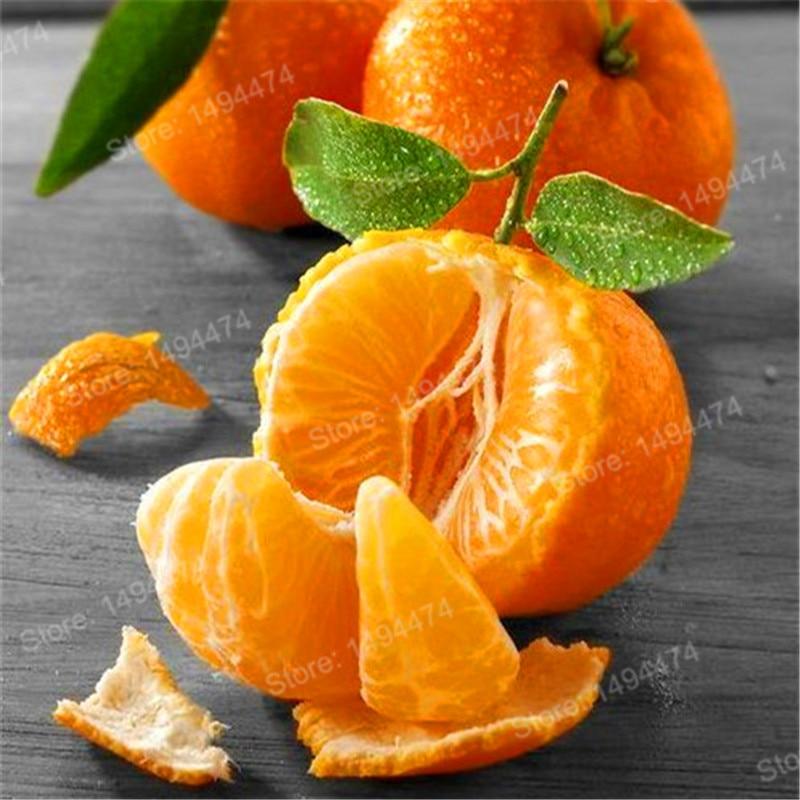 100pcs Mini Orange Tree Plants Seeds