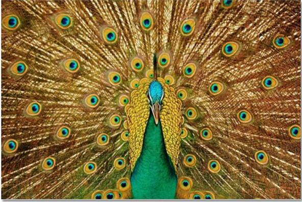3d Full Diy Diamond Embroidery Peacock 60X90cm Crafts Direct Selling Cotton New Needlework Painting Mosaic