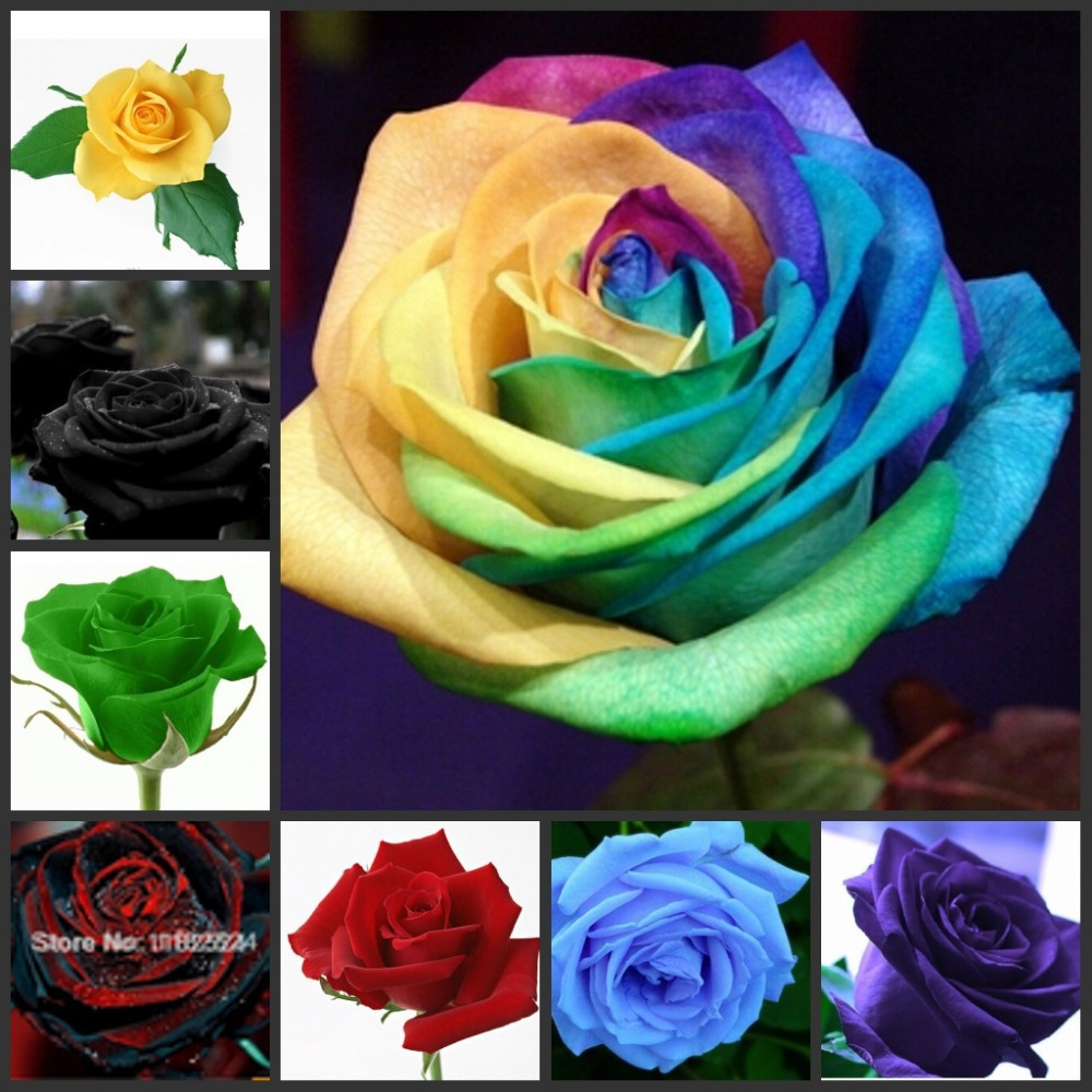400pcs Mixed Very Rare Blood Black Rose Seeds Rare Flowers Seeds