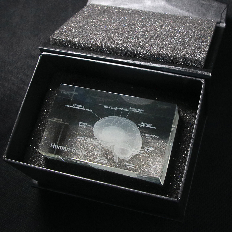 3d Menschliches Anatomisches Modell Briefbeschwerer Laser Geatzt Gehirn Kristall Glas Cube Anatomie Geist Neurologie Denken Medizinische Wissenschaft Geschenk Aliexpress