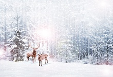 Laeacco Winter Photography Backgrounds Snow Forest Deer Sunshine Scene Baby Customized Photographic Backdrops For Photo Studio
