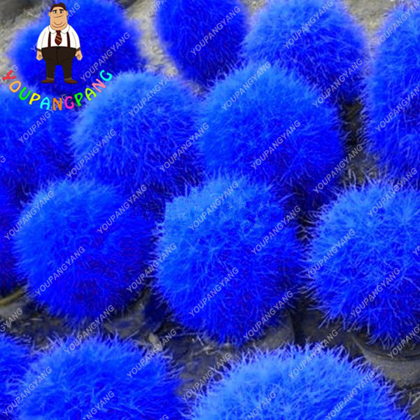 Deep Blue Burning Bush Kochia Scoparia Seeds Kochia Scoparia Grass Seeds  Ornamental Shrub Garden Decoration 200 Pcs In Bonsai From Home U0026 Garden On  ...