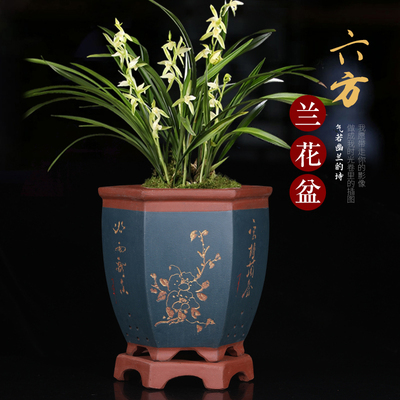 Purple Sand Pot Yixing Ceramic Breathable Root Tray High-end Indoor Household Bonsai Pots Orchid Special Basin