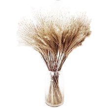 15 Pcs Home deco dried natural phragmites flowers small pampas grass bouquets reed