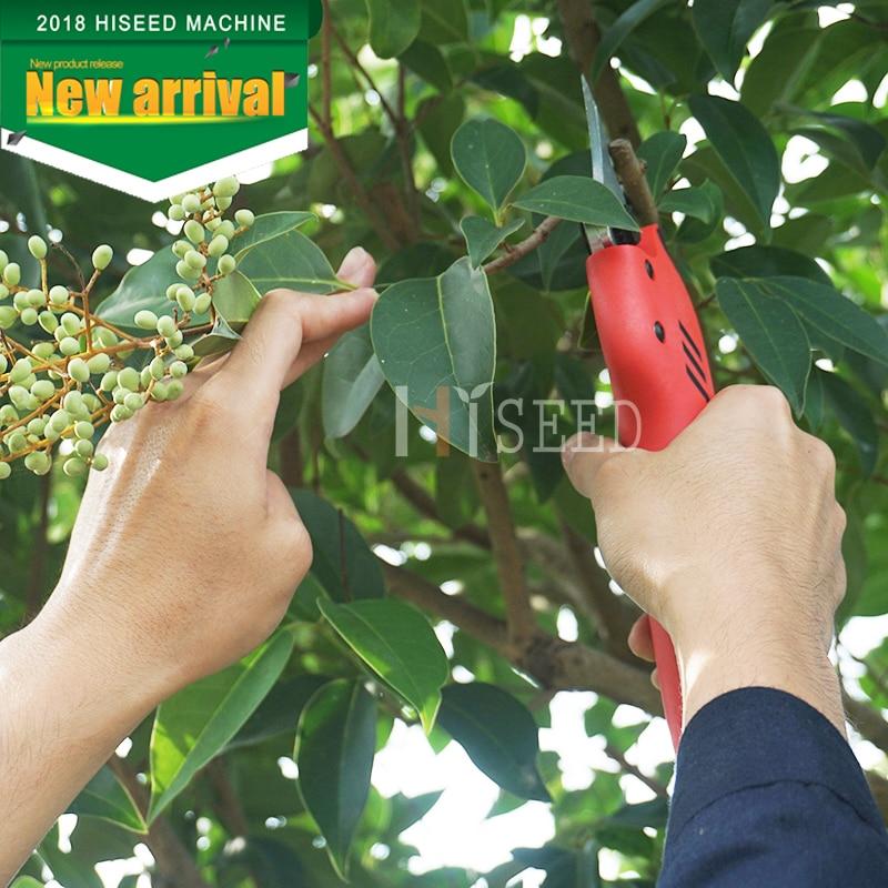 forbici per alberi da frutteto e da giardino (lama - Attrezzi da giardinaggio - Fotografia 1