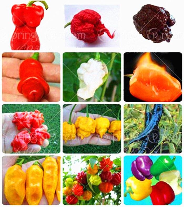 ᗑ200 unids/bolsa Chile pimienta semillas de rápido crecimiento ...