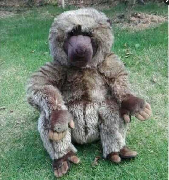 Simulation Baboons Doll Toy Pillow  African Wildlife Large Dolls Cute Plush Animals Toys  Gifts 40cm stuffed animals simulation border collie doll plush kids toys cute birthday gifts pillow dolls