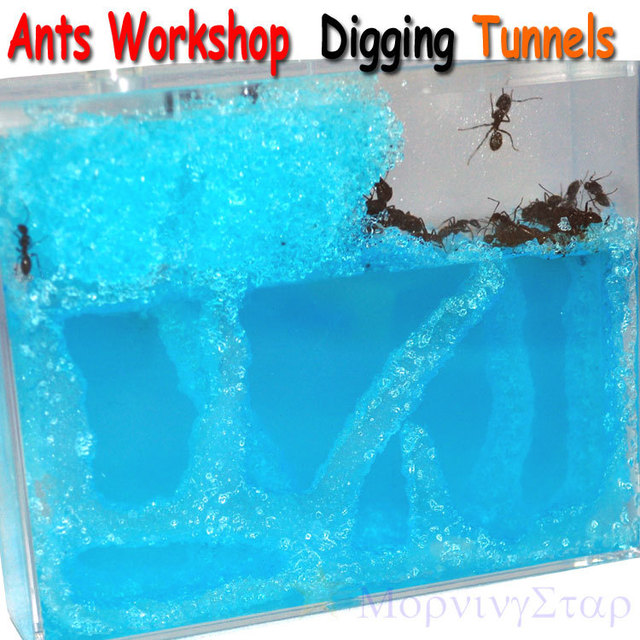 The Ants' Home Workshop Digging Tunnels Ecological Toys For Boys Girls