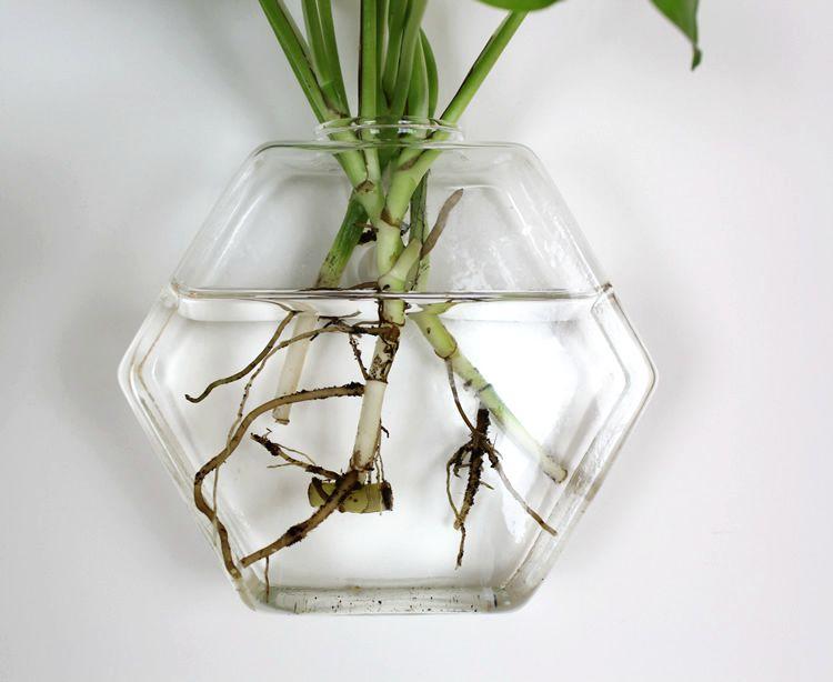 Hexagon Glass Wall Vase Wall Mounted Glass Vase Indoor Plants