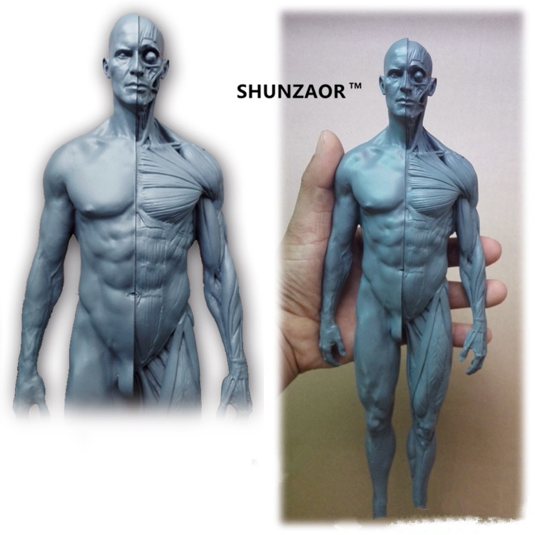 30cm Human Anatomical Model Anatomy Skull Head Muscle Bone Medical Artist Drawing Manikin Articulated Mannequin