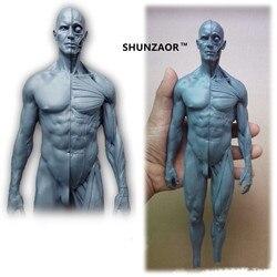 30cm modelo anatômico humano anatomia crânio cabeça músculo osso médico artista desenho manequim articulado manequim