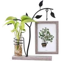 Creative Hydroponic Plant Frame Set Wooden Photo Frame Picture Frames For Pictures