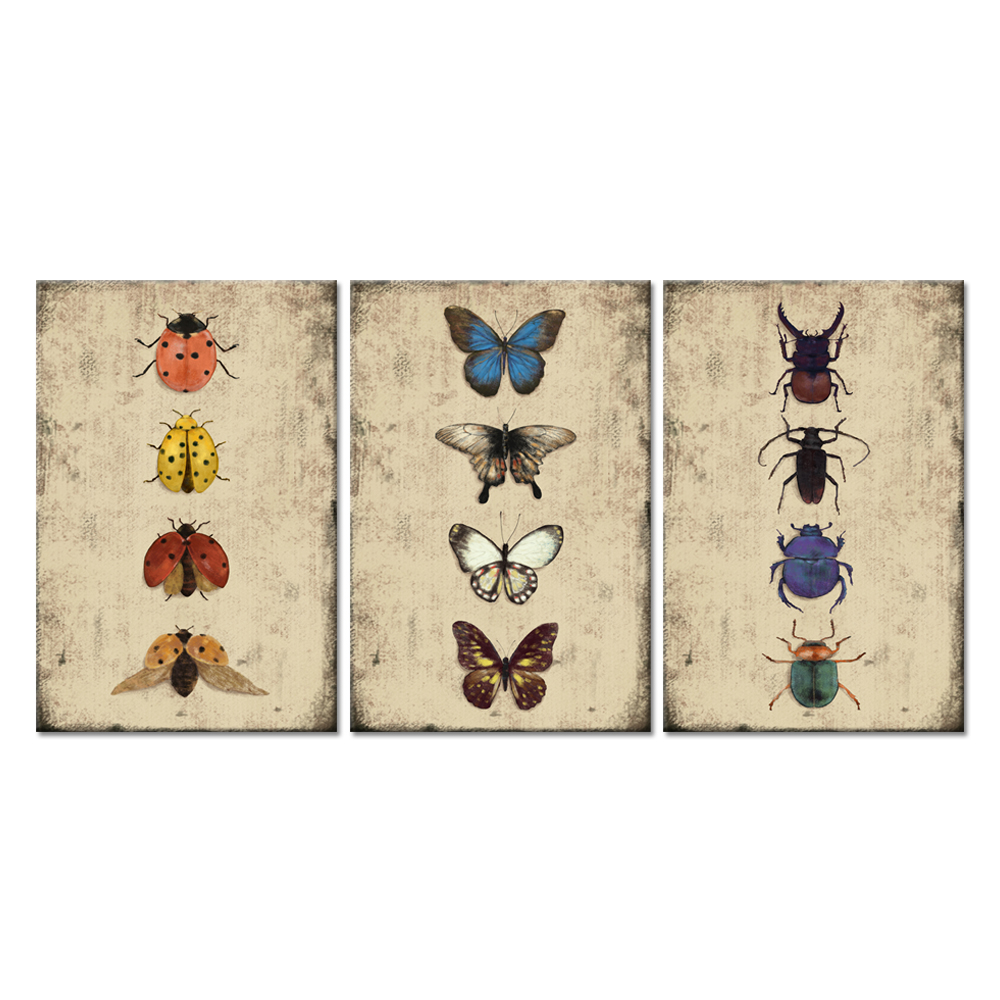3 Panel Canvas Wall Art Multi Insect Collectors Artwork Series Butterfly Ladybird Beetles Giclee Print For House Garden Bedroom|Painting & Calligraphy| |  - title=