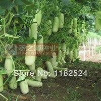 Alta-rendimento Tailândia SAYALI 518 F1 Pepino Sementes de frutas sementes de hortaliças (100 pcs)