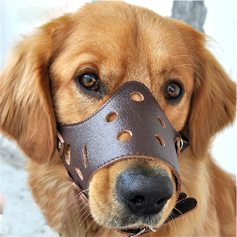 Can Dogs Bark With A Muzzle