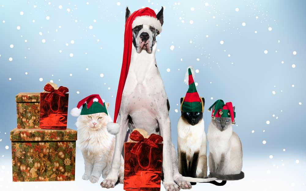 Animals canvas piantings posters for room cats new year holiday costumes print on canvas Dogs painting