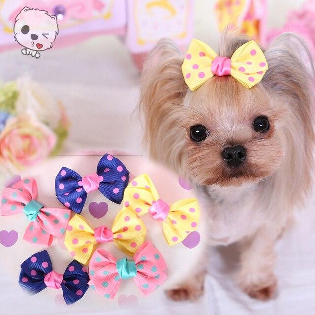 Yorkshire Terrier et caniche accessoires pour cheveux accessoires de  toilettage pour animaux de compagnie épingle à