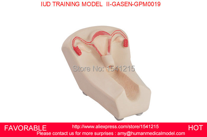 NURSING  MANIKIN FEMALE IUD BIRTH CONTROL MODEL FEMALE CONTRACEPTION SIMULATOR IUD MODEL IUD TRAINING MODEL GASEN-GPM0019NURSING  MANIKIN FEMALE IUD BIRTH CONTROL MODEL FEMALE CONTRACEPTION SIMULATOR IUD MODEL IUD TRAINING MODEL GASEN-GPM0019