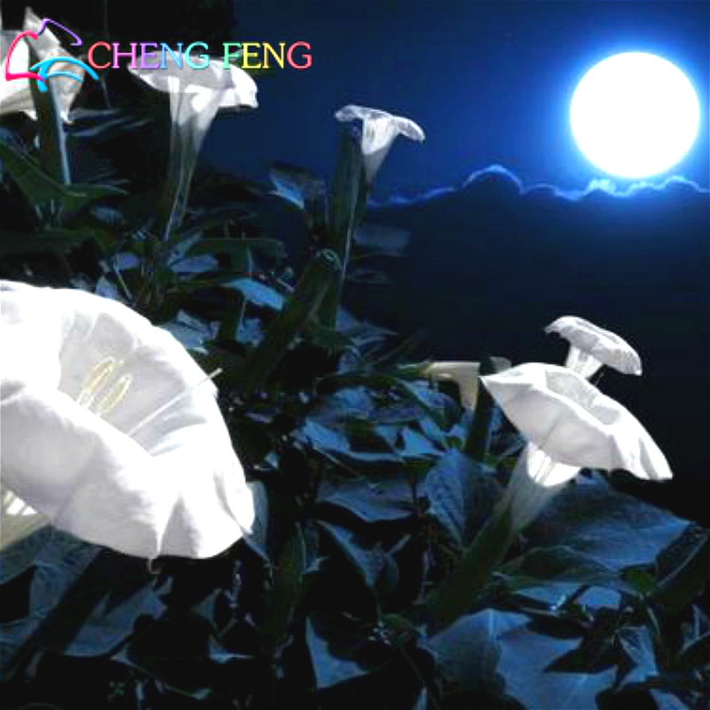100pcs bonsai big white moonflower seed new mini jardin fragrant 100pcs bonsai big white moonflower seed new mini jardin fragrant night flower bulbs morning glory seeds garden decoration flores in bonsai from home mightylinksfo