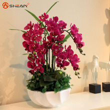 Rare Birds Phalaenopsis Orchid Seeds Flower Seeds Indoor Bonsai Orchids Plant 100 particles / lot