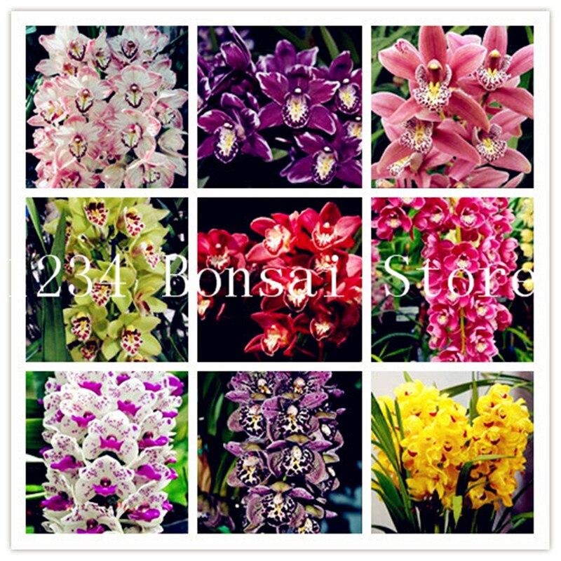 Home Garden Decor Bonsai Begonia Flower Perennial Seeds Court 30Pcs Potted Plant
