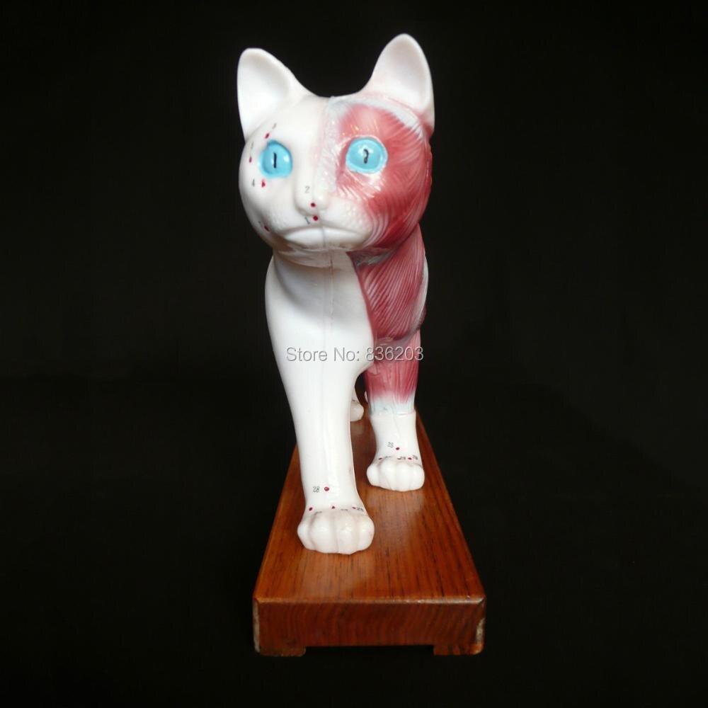 Veterinarian\'s Cat Feline Acupuncture Model for sale medical Anatomy ...
