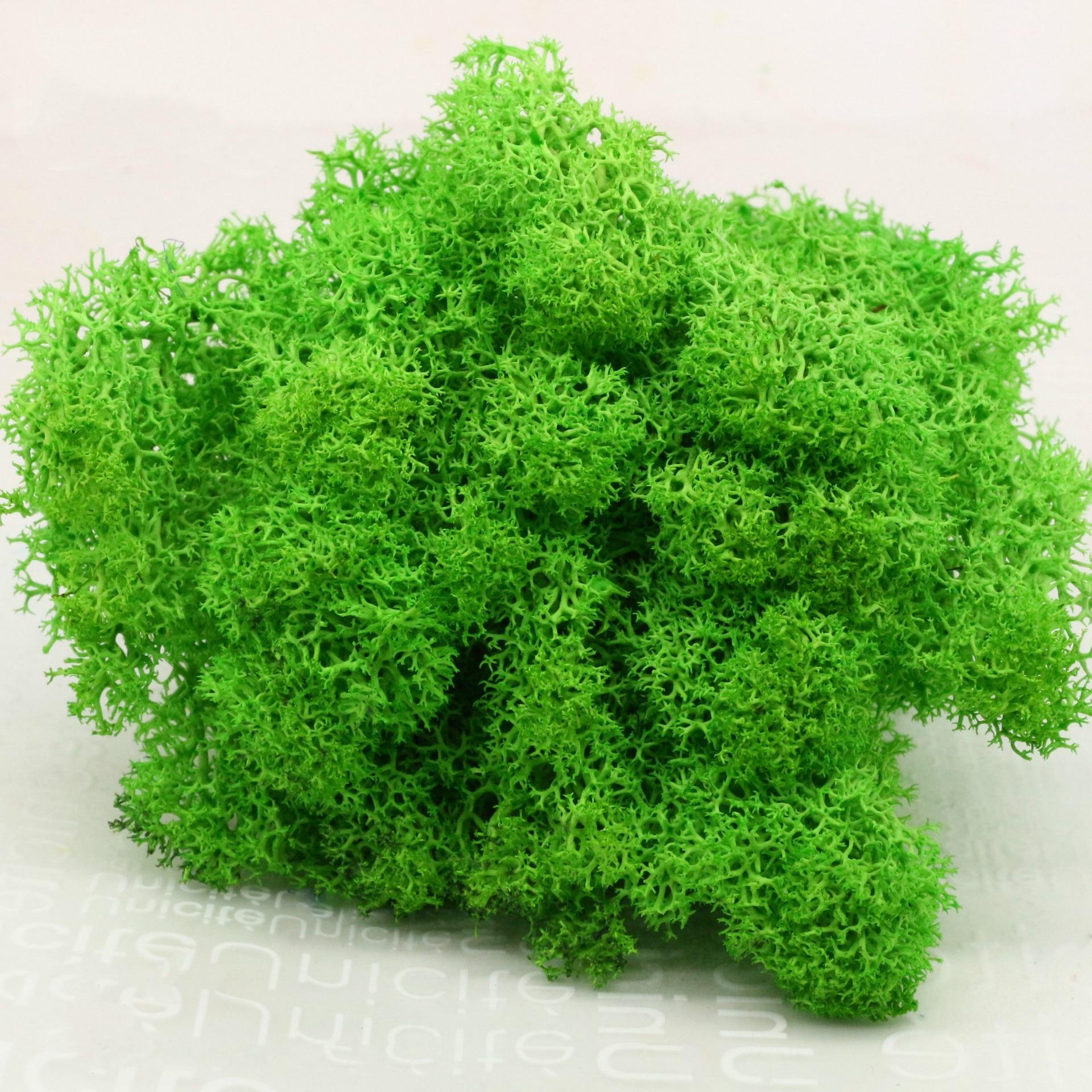 Flower Artificial plant Eternal Life Moss Reindeer Moss Micro Landscape