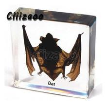 Bat specimen animal paperweight  bat Taxidermy Collection embedded In Clear Lucite Block Embedding Specimen