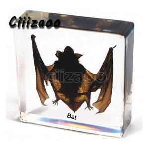 Image 1 - Bat specimen animal paperweight  bat Taxidermy Collection embedded In Clear Lucite Block Embedding Specimen