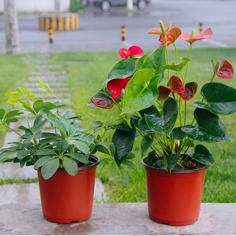 Modern Style 200Pcs Plastic Flower Pots Planters Garden Plant Nursery Pots Container for Growing Herbs Smaller Annual Vegetables