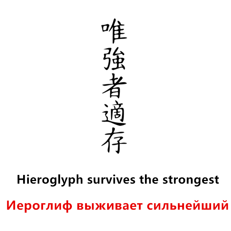 CS 910 10 50cm Hieroglyph survives the strongest funny car sticker vinyl decal silver black for auto car stickers styling in Car Stickers from Automobiles Motorcycles
