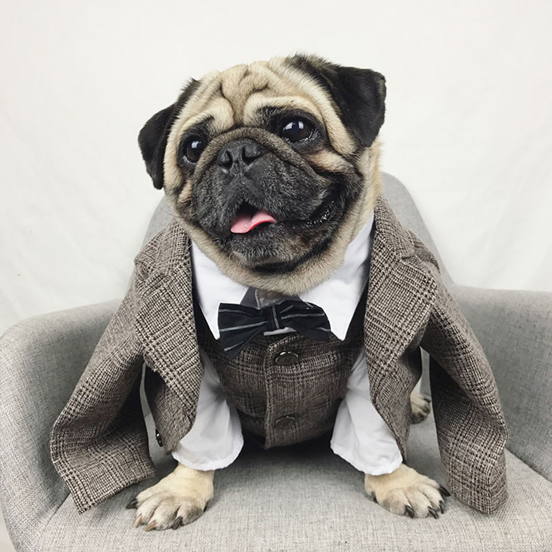 Formal Canine Garments Wedding ceremony Pet Canine Go well with Pets Canine Clothes For Canine Pets Provides XS-XXL Pet Attire Pet Outfit Pug Bulldog HTB1rJQrtTdYBeNkSmLyq6xfnVXa5
