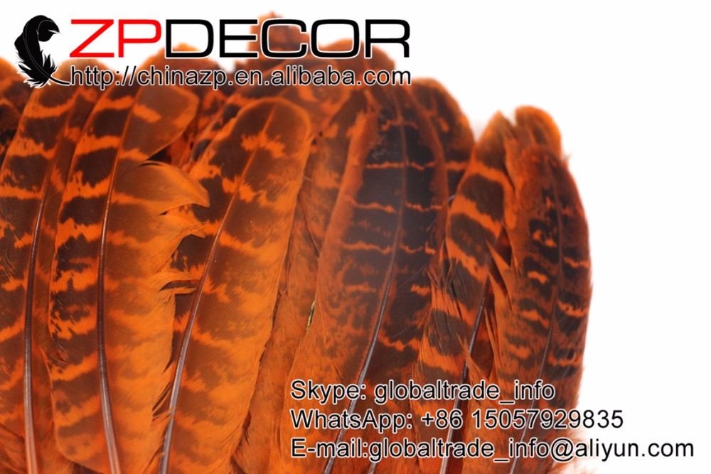 5 Dyed orange ringneck pheasant quill wing feathers wholesale. (7)