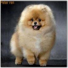 Набор для алмазной вышивки с изображением собаки Петера Рен