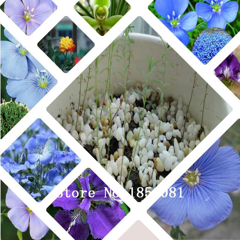 Bonsai basket flower seeds 100 pcs Blue Flax seeds Organic Newly Harvested Beautiful Blue Flower,Free shipping!