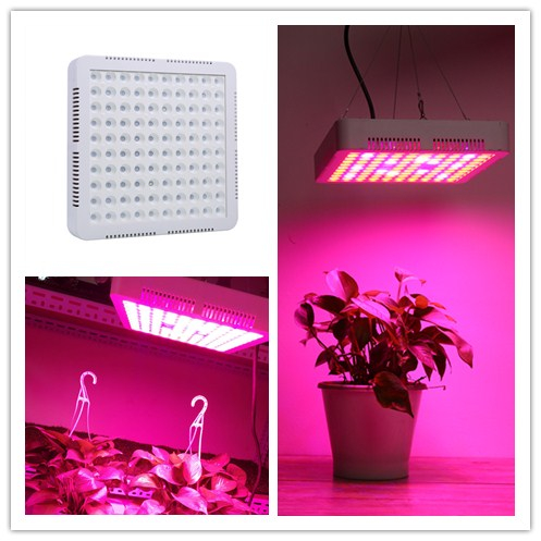 High Power 300W LED Grow Light Full Spectrum Hydroponic Sansun Plant Grow Light Veg Bloom Plant Indoor EU/US Plug best led grow light 600w 1000w full spectrum for indoor aquario hydroponic plants veg and bloom led grow light high yield