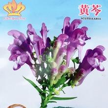 2019 Семена цветов Semillas Sun Garden Бонсай Растения Домашнее Садоводство Семена Китайской