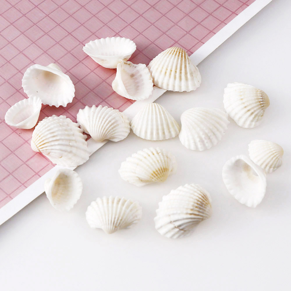 About 30Pcs 27x21.5mm White Shell Small Conch Nature Jewelry Craft Decor Natural Conch Shells Conch Corn Screw Wall Decoration