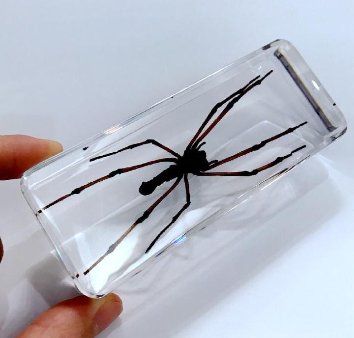 Livraison gratuite YQTDMY Vintage araignée insecte spécimen clair presse-papier éducation Cool cadeau artisanat
