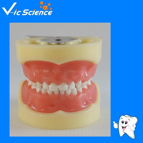 Standard Child Model with 24pcs teeth and Soft Gum) child choke model child infant asphyxia model