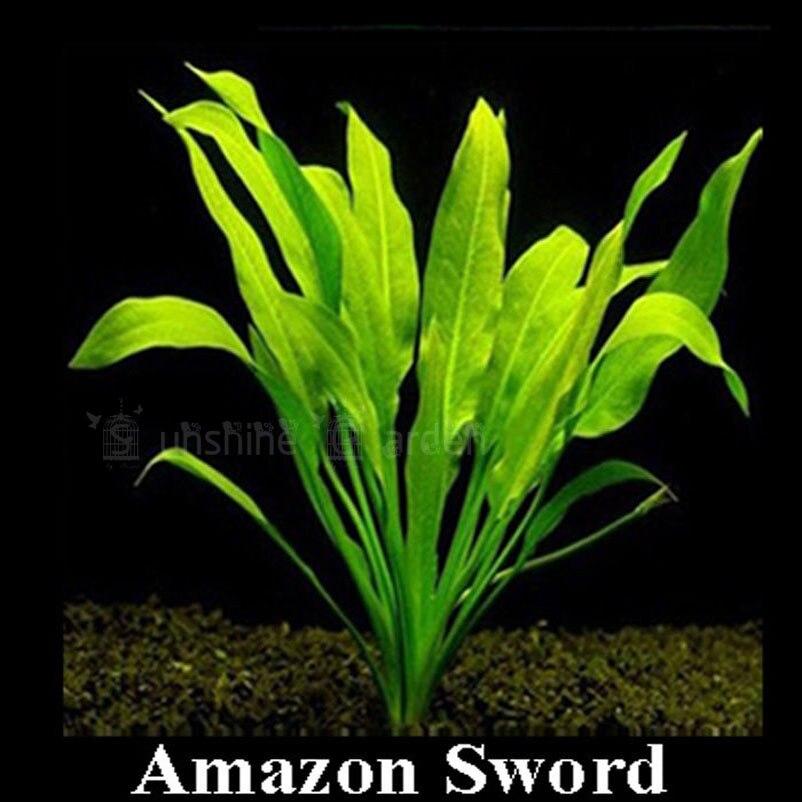 меч трава