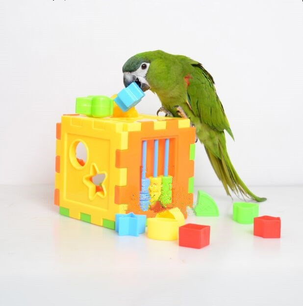 Parakeet Toys And Accessories : Pet birds parrot toy bird product supplies puzzle for