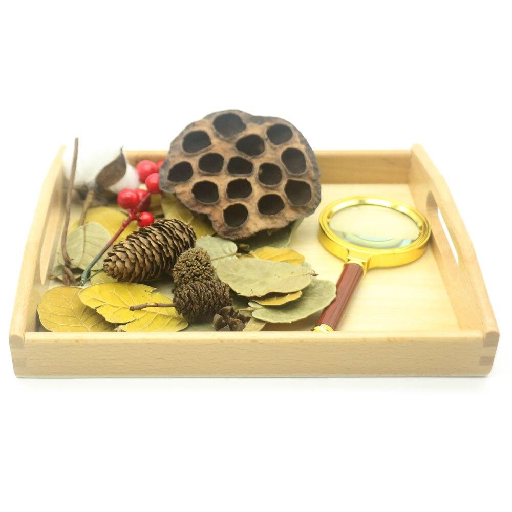 montessori-vie-pratique-materiel-plantes-activites-nature-jouets-sensoriels-educatifs-jouets-en-bois-pour-enfants-juguetes-mf0464h