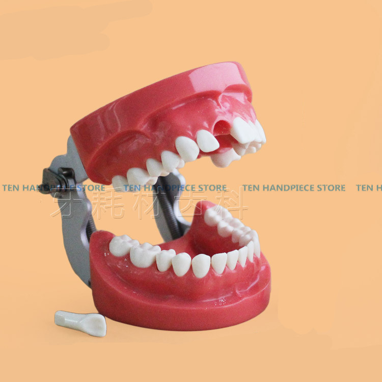 2018 Good Quality Dental removable dental model dental tooth arrangement practice model with screw teaching simulation model dental removable dental model dental tooth arrangement practice model with screw teaching simulation model oral materials