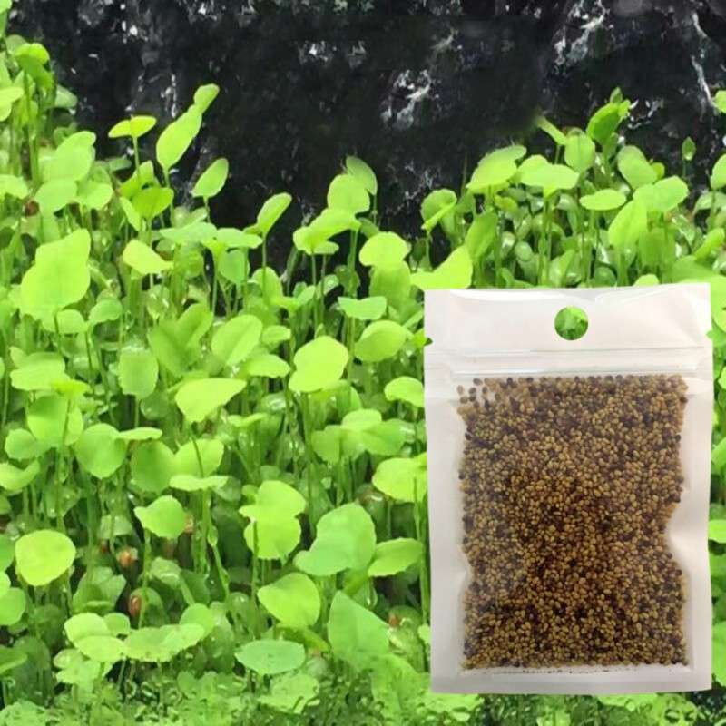 Aquarium Plants Aquatic Water Grass Seeding Cow-hair love Lucky Seeding plant for Fish Tank Plant Decoration