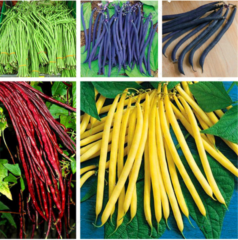 20pcs/bag bean seeds vegetable seeds Phaseolus vulgaris plant, green beans seeds,Natural growth,plant for home garden ...